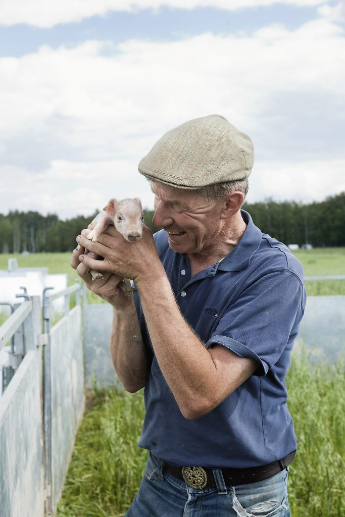 Lykkelige griser er første prioritet på Ask Gård